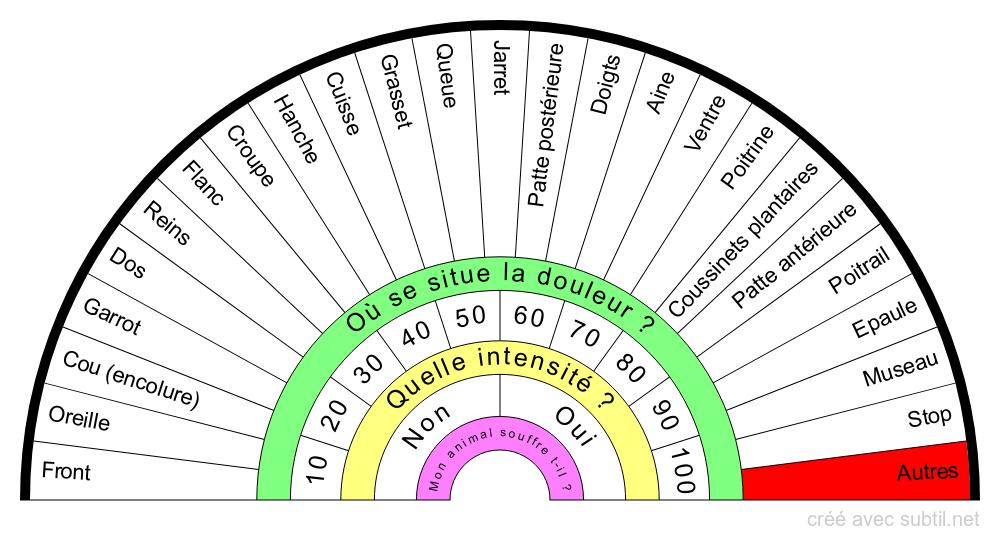 Anatomie Externe du CHAT et CHATTE