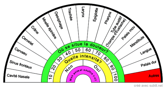 Anatomie de la tête du CHAT