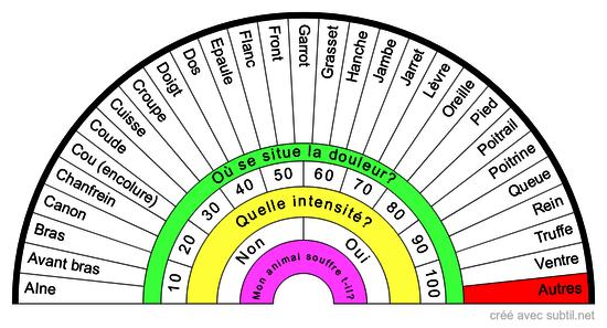 Anatomie Externe du CHIEN/CHIENNE