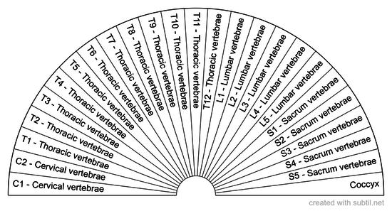 Vertebral Column Anatomy