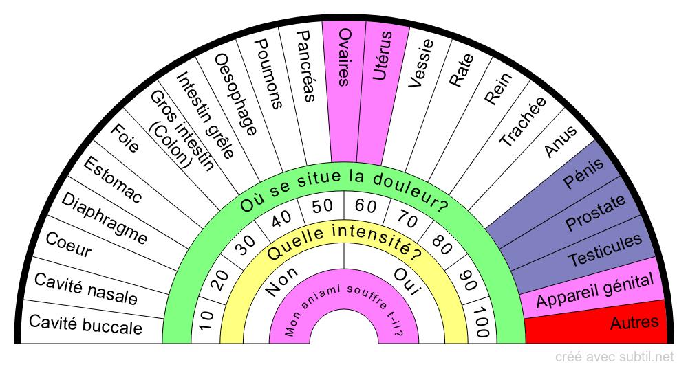 Anatomie du CHIEN/CHIENNE Organes