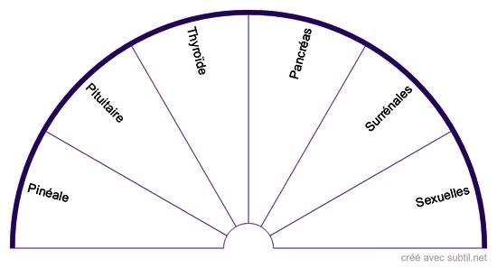 Les systèmes #2 - Les glandes