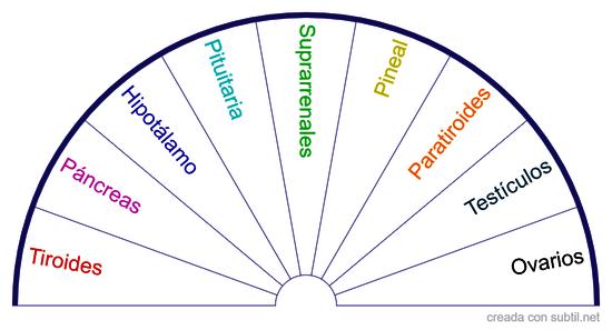 Glándulas Sistema Endocrino